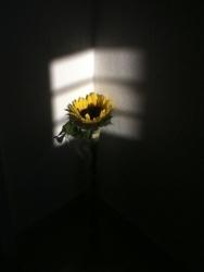 http://visionysubversion.com/files/gimgs/th-19_IMG_2159.jpg